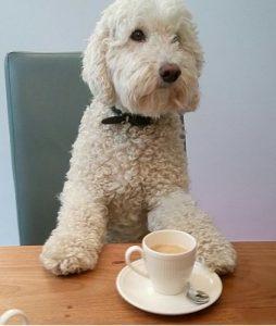 Indy met kopje koffie